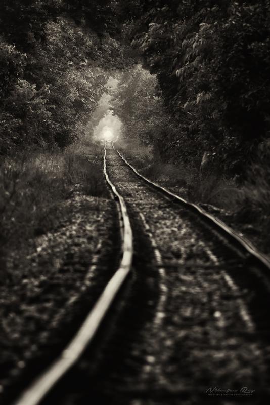 Trainline-through-a-forest