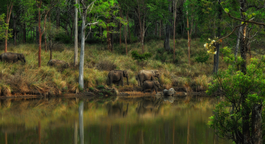 Elephants coming for a drink