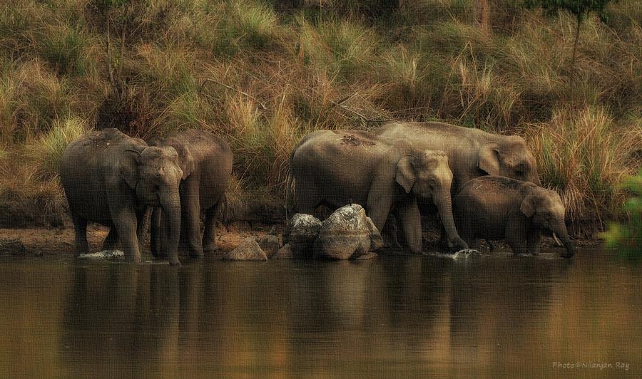 Drinking elephants