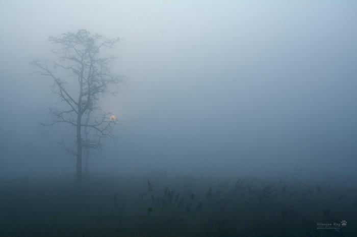 Sunrise-in-the-mist