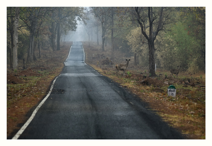 13 km to Moharli. Shot on a rainy afternoon.