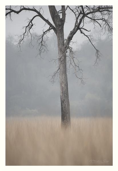 Lone tree. Grassland.