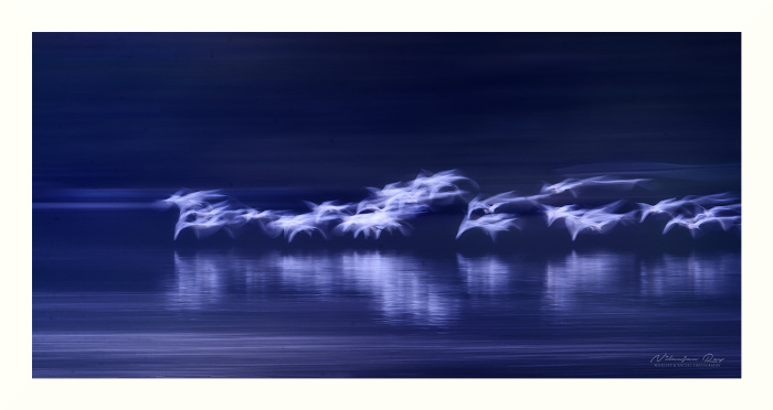 Herons over dark water