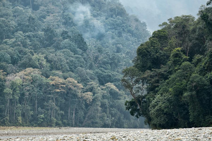 Riverbank, Noa Dehing. Namdhapa. Arunachal.