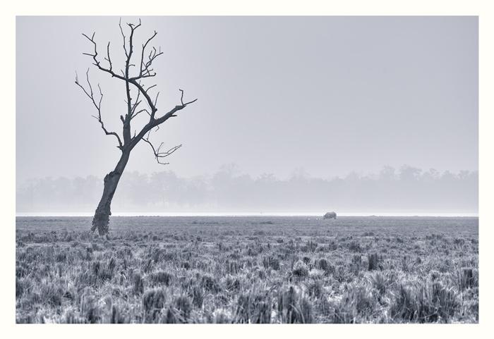 Rhinoscape. Misty morning.