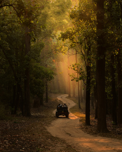 Kanha safari