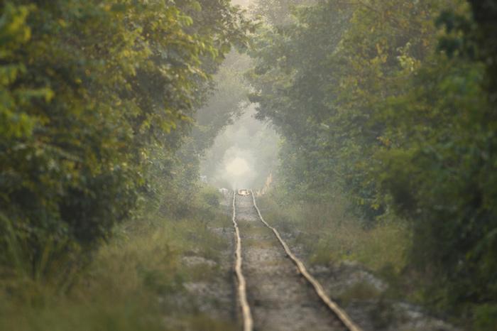Trainline through Dudhwa